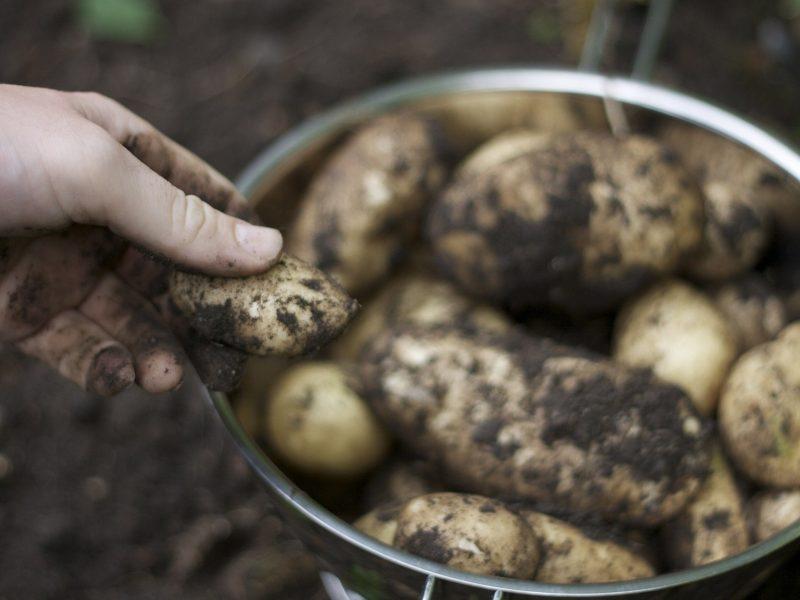 Potato 5911588 1920