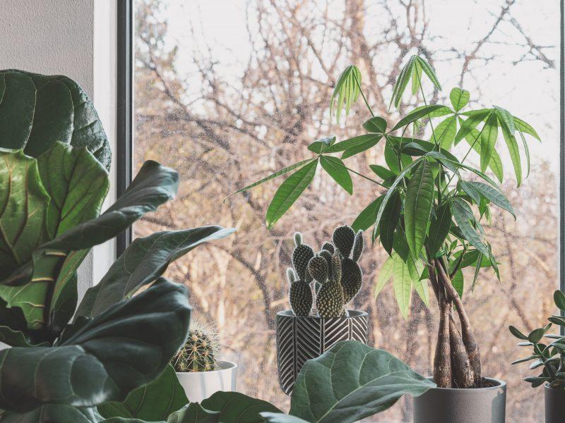 winter houseplant
