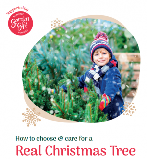 How to choose a real christmas tree
